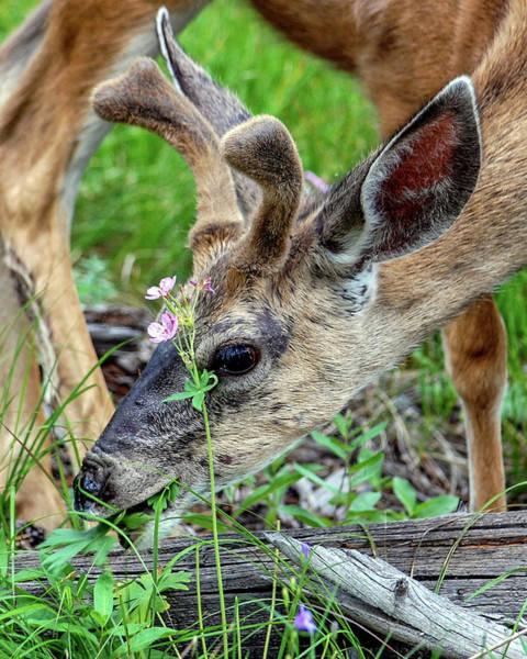 Teton National Park Digital Art - Spring Buck by Chaz Noles