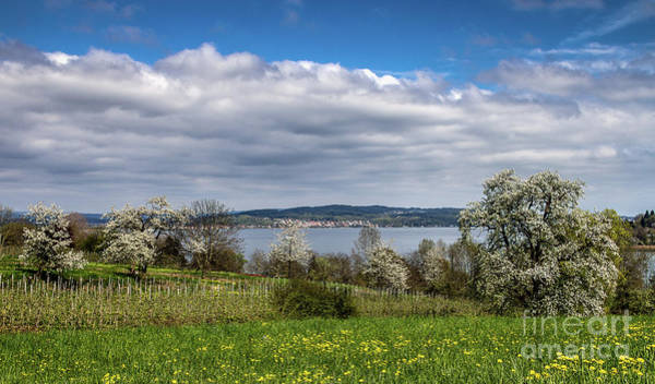 Photograph - Spring On Lake Constance by Bernd Laeschke