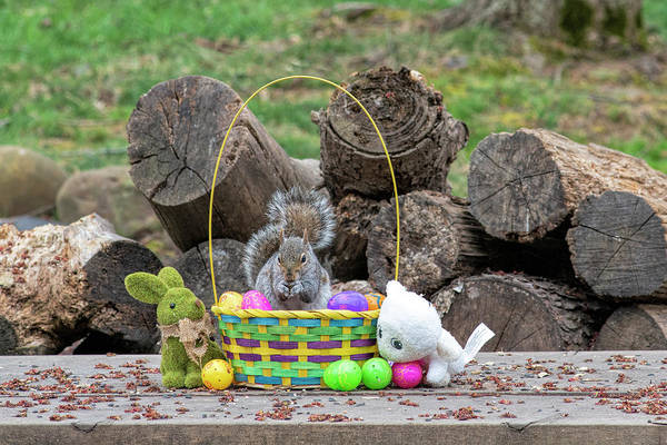 Photograph - Squirrel Eating In Easter Basket by Dan Friend