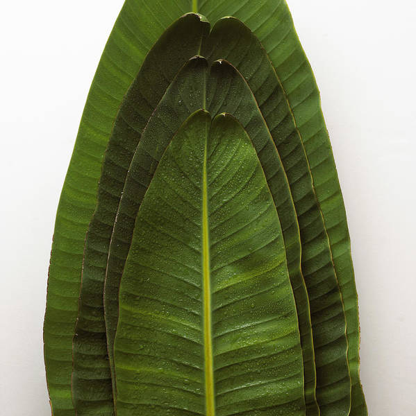 Cut Out Photograph - Stack Of Leaves by Burke/triolo Productions