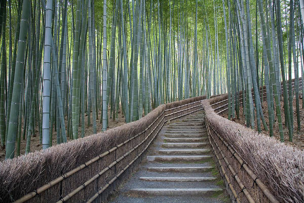 Wall Art - Photograph - Stairway Through Bamboo Grove Above by Brent Winebrenner