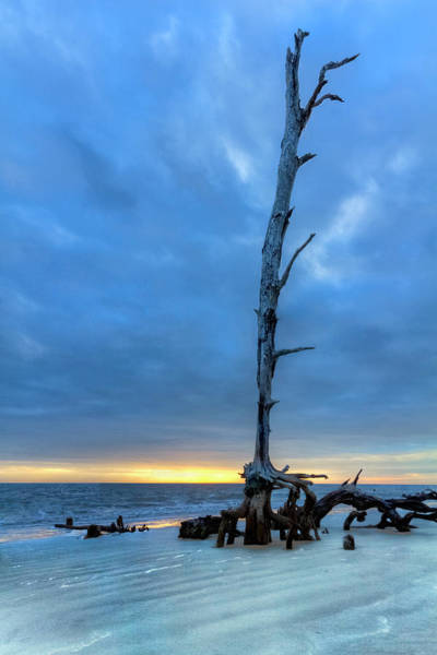 Wall Art - Photograph - Standing Tall At Low Tide by Debra and Dave Vanderlaan