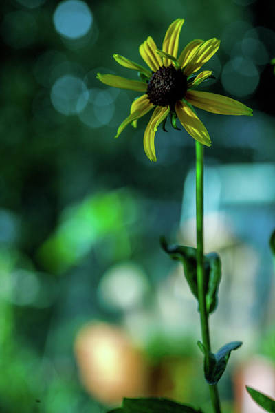 Wall Art - Photograph - Standing Tall by Bonnie Bruno