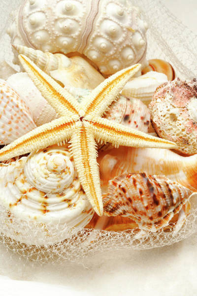 Messier Object Photograph - Starfish And Assorted Seashells by Imagemore Co.,ltd.