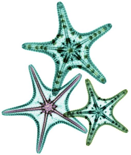 Underwater World Photograph - Starfish by Gustoimages