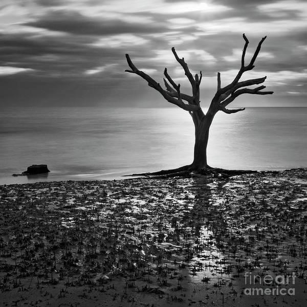 Photograph - Still Standing by Patrick M Lynch
