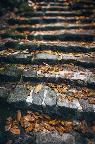 Wall Art - Photograph - Stone Stairway by Carlos Caetano