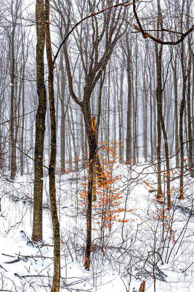 Woodlot Photograph - Stopping By Woods... by Steve Harrington