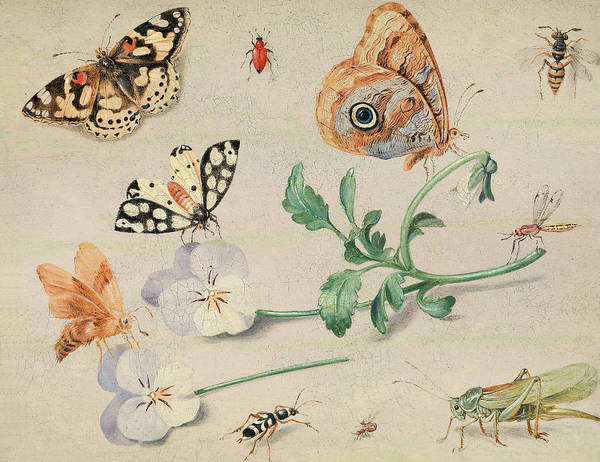 Painting - Study Of Insects And Flowers by Jan van Kessel the Elder
