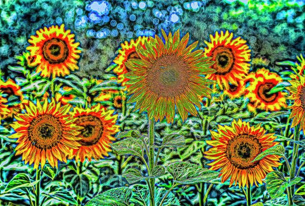 Wall Art - Photograph - Sunflowers Of Dreams by David Pyatt