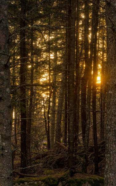 Wall Art - Photograph - Sunrise Through Trees by Michael Lustbader