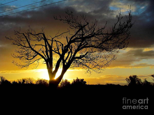 Photograph - Sunset Behind The Tree. by Joyce Woodhouse