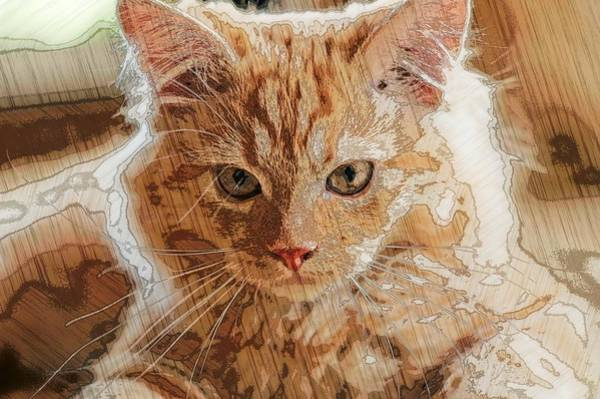 Digital Art - Super Duper Artistic Cat by Don Northup