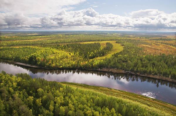 Cedar Tree Photograph - Taiga. Western Siberia by Pro-syanov