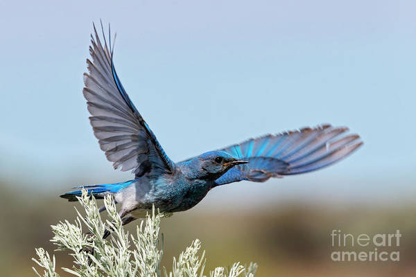 Wall Art - Photograph - Take To The Air by Mike Dawson