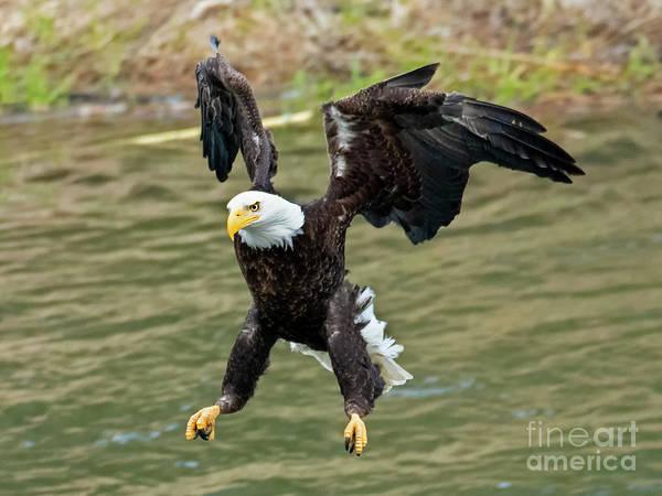 Talon Photograph - Gear Down by Mike Dawson