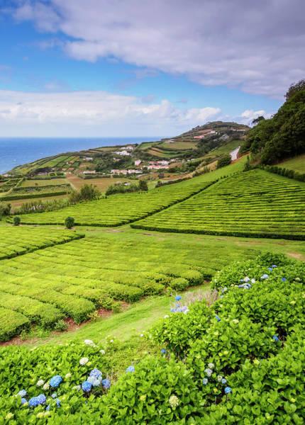 Wall Art - Photograph - Tea Fields Porto Formoso Sao Miguel Island Azores Portugal by imageBROKER - Karol Kozlowski