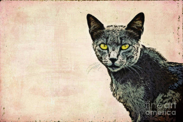 Mixed Media - The Cat by Angela Doelling AD DESIGN Photo and PhotoArt