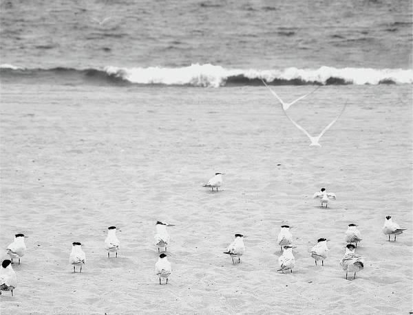Wall Art - Photograph - The Coastline Flock by Bill Carson Photography