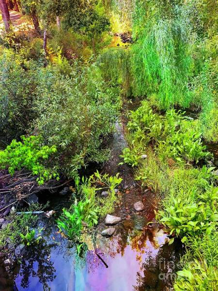 Photograph - The Creek by Leslie Hunziker