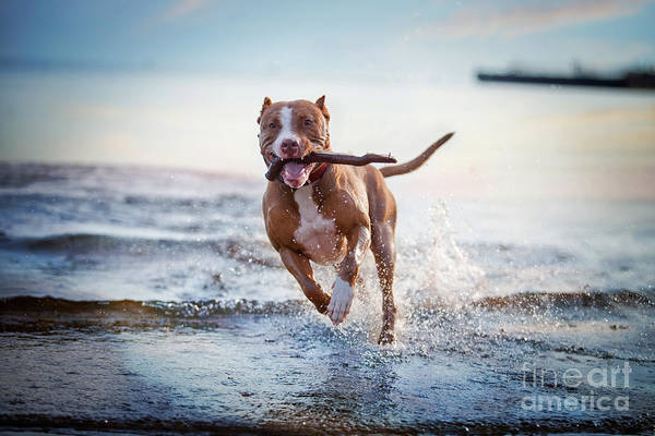 Wall Art - Photograph - The Dog In The Water, Swim, Splash by Dezy