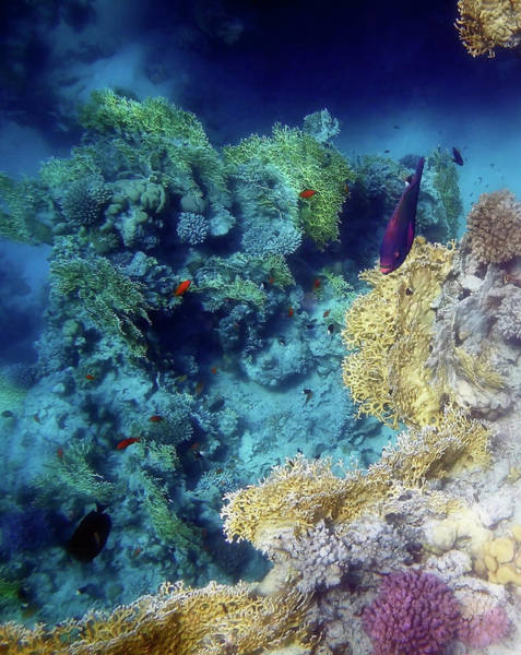 Photograph - The Exotic And Exciting Red Sea by Johanna Hurmerinta