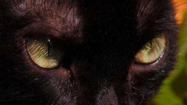 Photograph - The Eyes Of A Black Cat by Eye to Eye Xperience