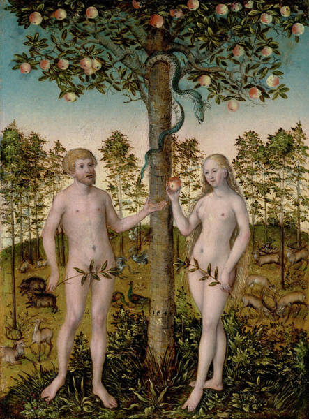 The Creation Of Adam Wall Art - Painting - The Fall Of Man by Lucas Cranach the Younger