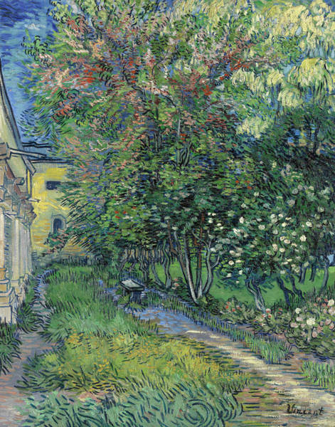 Wall Art - Painting - The Garden Of The Asylum At Saint-remy by Vincent Van Gogh