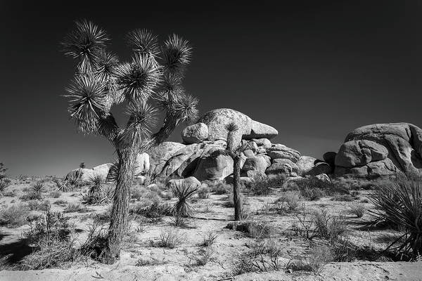 Desert Plant Photograph - The Joshua Tree by Peter Tellone