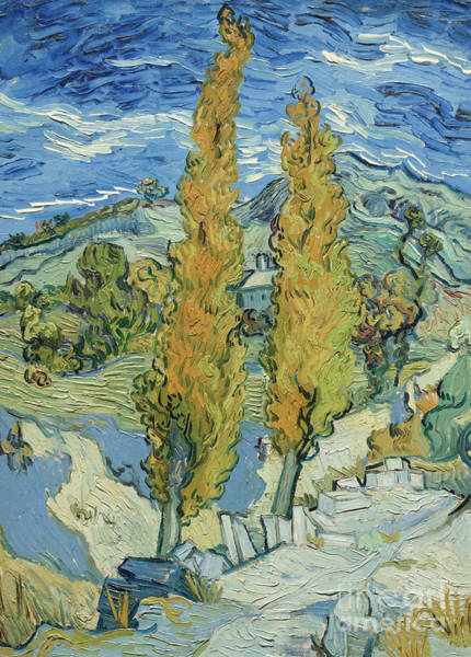 Wall Art - Painting - The Poplars At Saint Remy, 1889  by Vincent Van Gogh
