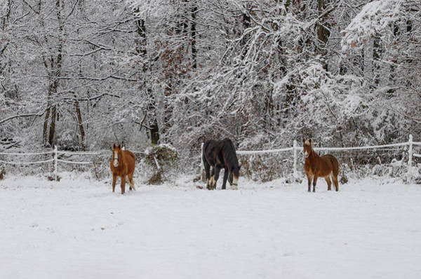 Wall Art - Photograph - Three Horses In The Snow by Bill Cannon