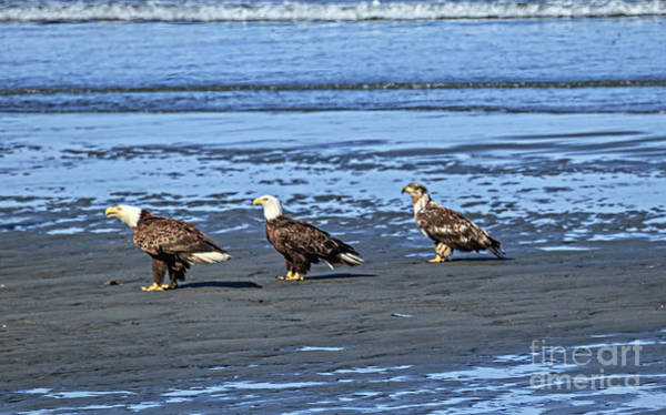 Wall Art - Photograph - Three Is A Crowd by Robert Bales