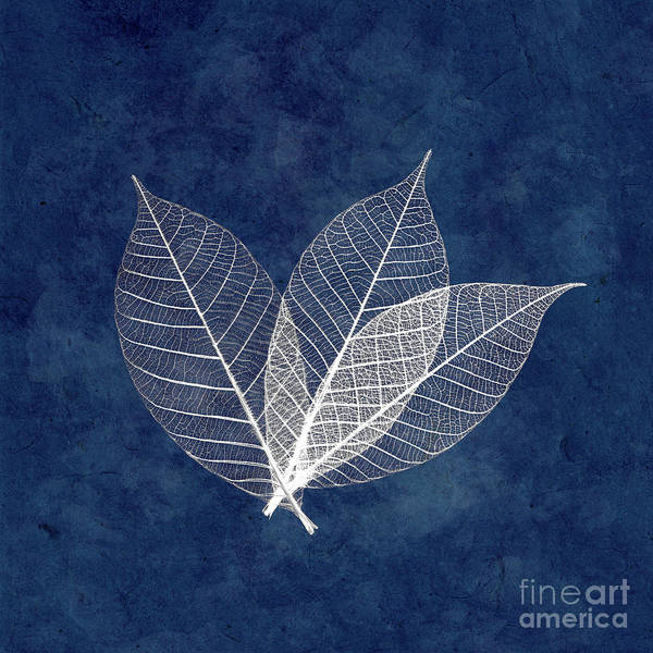 Wall Art - Photograph - Three White Leaves On Blue by Delphimages Photo Creations