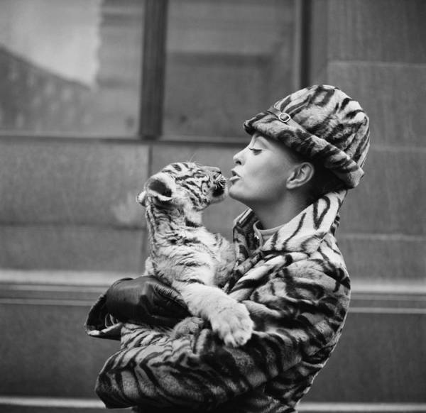Cute Photograph - Tiger Lady by Central Press