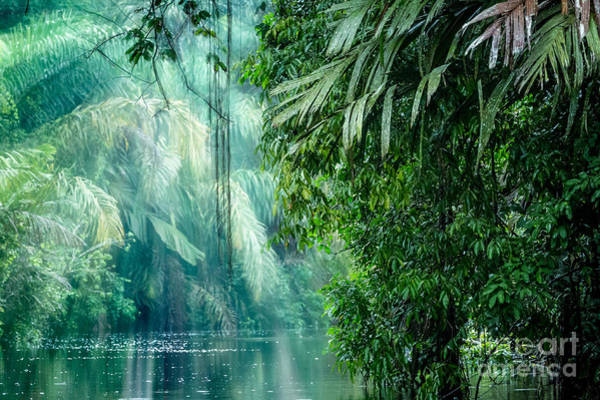 Rain Forest Wall Art - Photograph - Tortuguero National Park, Rainforest by Ronnybas Frimages