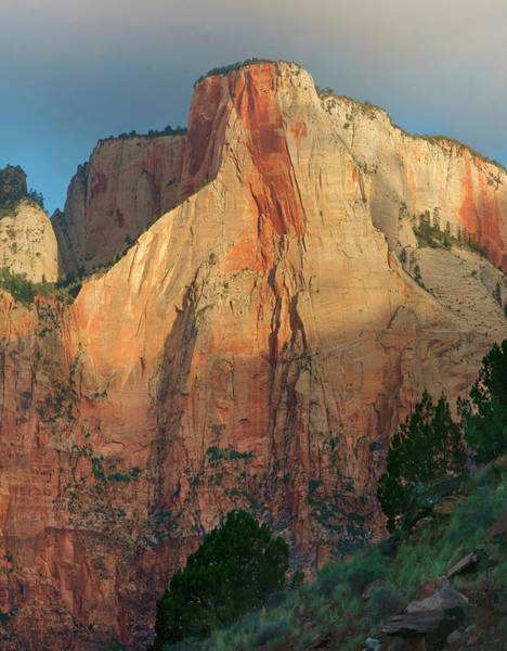 Photograph - Towers Of The Virgin, Zion National by