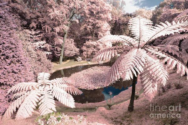 Wall Art - Photograph - Tree Ferns by Gaspar Avila