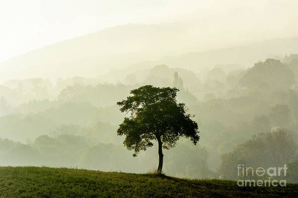Wall Art - Photograph - Tree In A Field by Bernard Jaubert