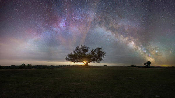 Wall Art - Photograph - Tree Of Light  by Aaron J Groen