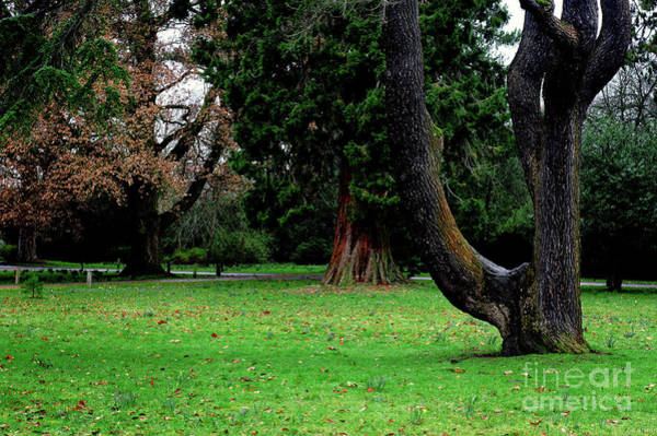 Wall Art - Photograph - Trees In A Park by Tom Gowanlock