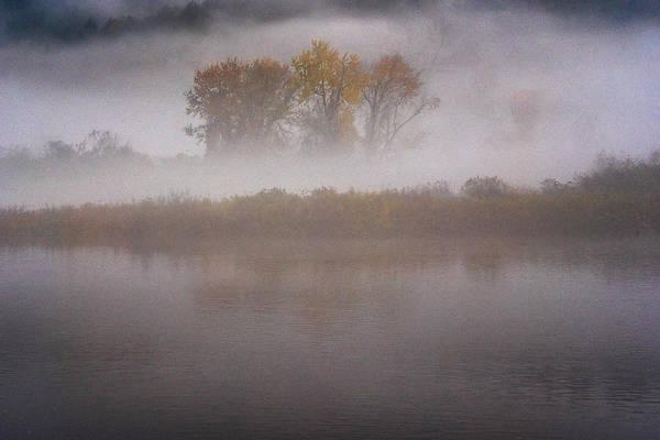 Photograph - Trees In Fog by Tom Singleton