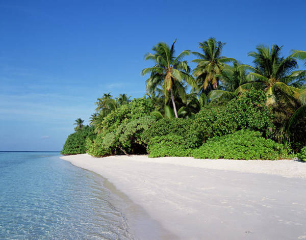 Scenery Photograph - Tropical Island by Jupiterimages ??