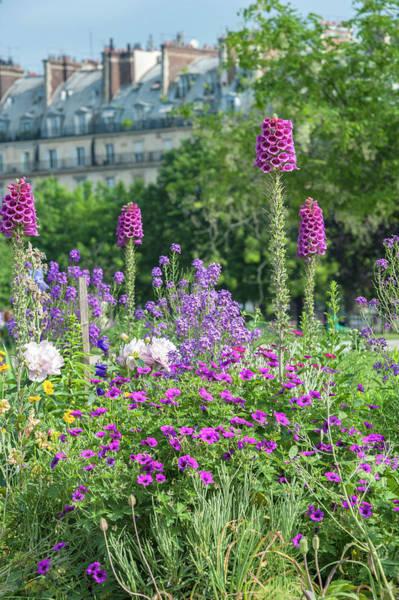 Wall Art - Photograph - Tuileries Garden, Paris, France by Lisa S. Engelbrecht