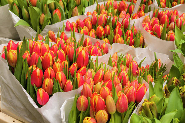 Holland Wall Art - Photograph - Tulips For Sale At A Flower Market by P A Thompson