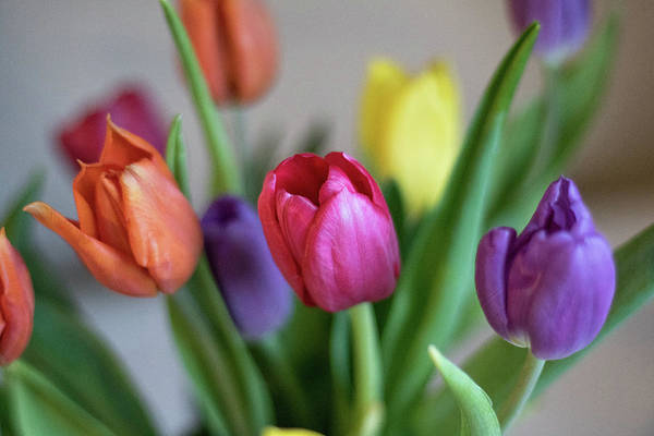 Wall Art - Photograph - Tulips by Martin Newman