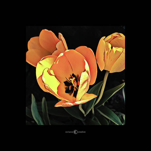 Photograph - Tulips by Tim Nyberg