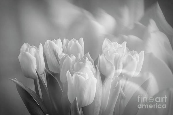 Abstract Impressionism Photograph - Tulips by Veikko Suikkanen
