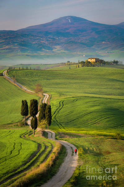 Wall Art - Photograph - Tuscan Road by Brian Jannsen