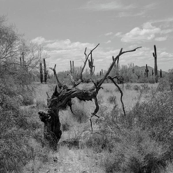 Photograph - Twisted Tree by HW Kateley